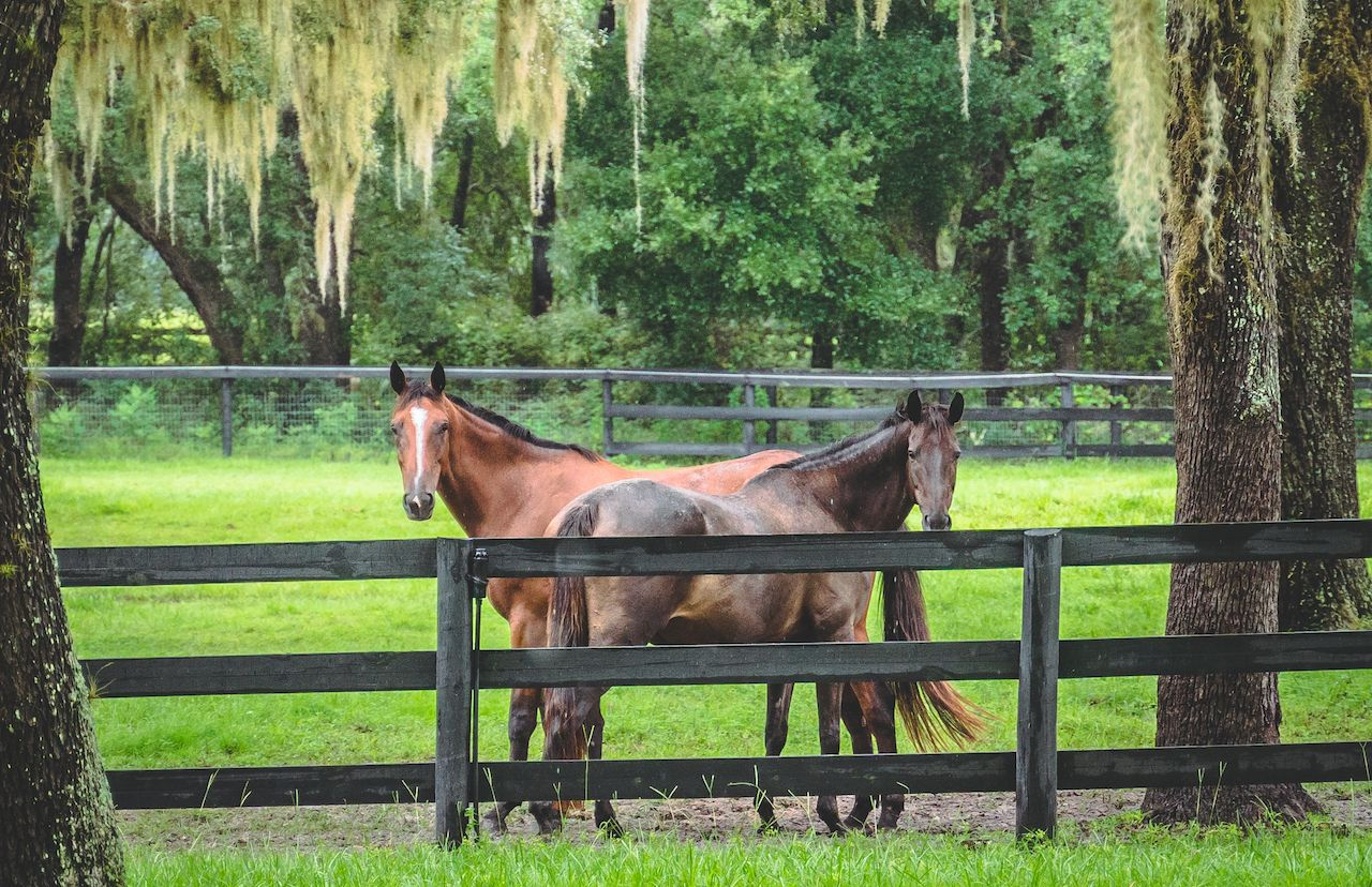 Two Horses in Ocala, Florida, outdoors in central florida