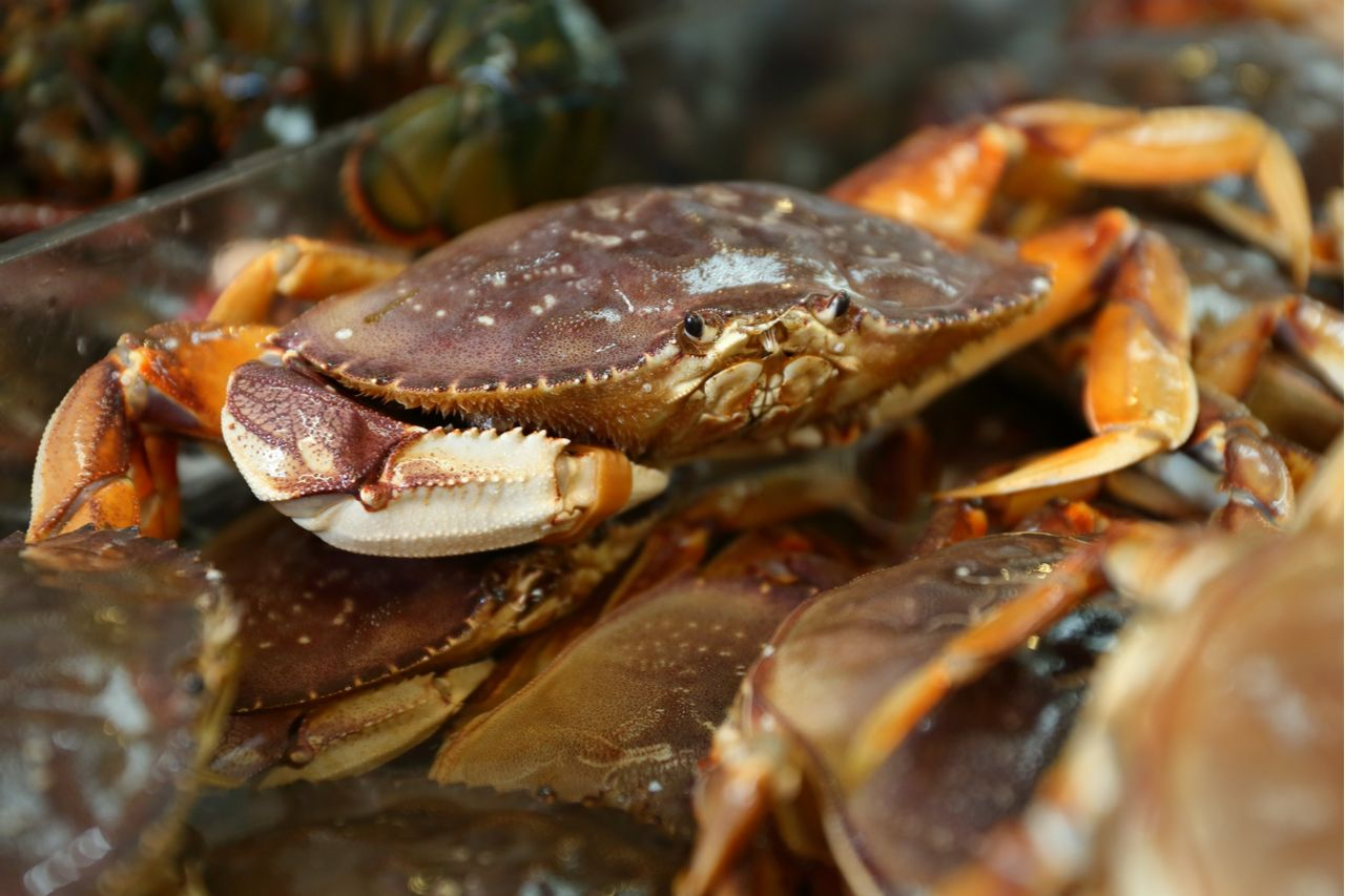 Seafood Market Live Dungeness Crabs. Live Dungeness crabs for sale at a Seattle market., Washington seafood
