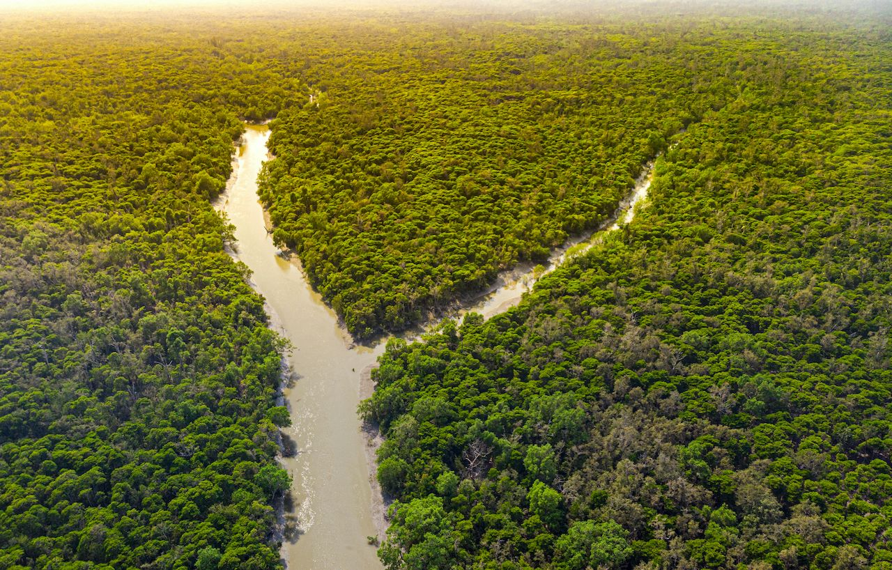 At-risk-natural-wonders-Sundarbans-Mangrove-Forest-1713408154, At-risk natural wonders