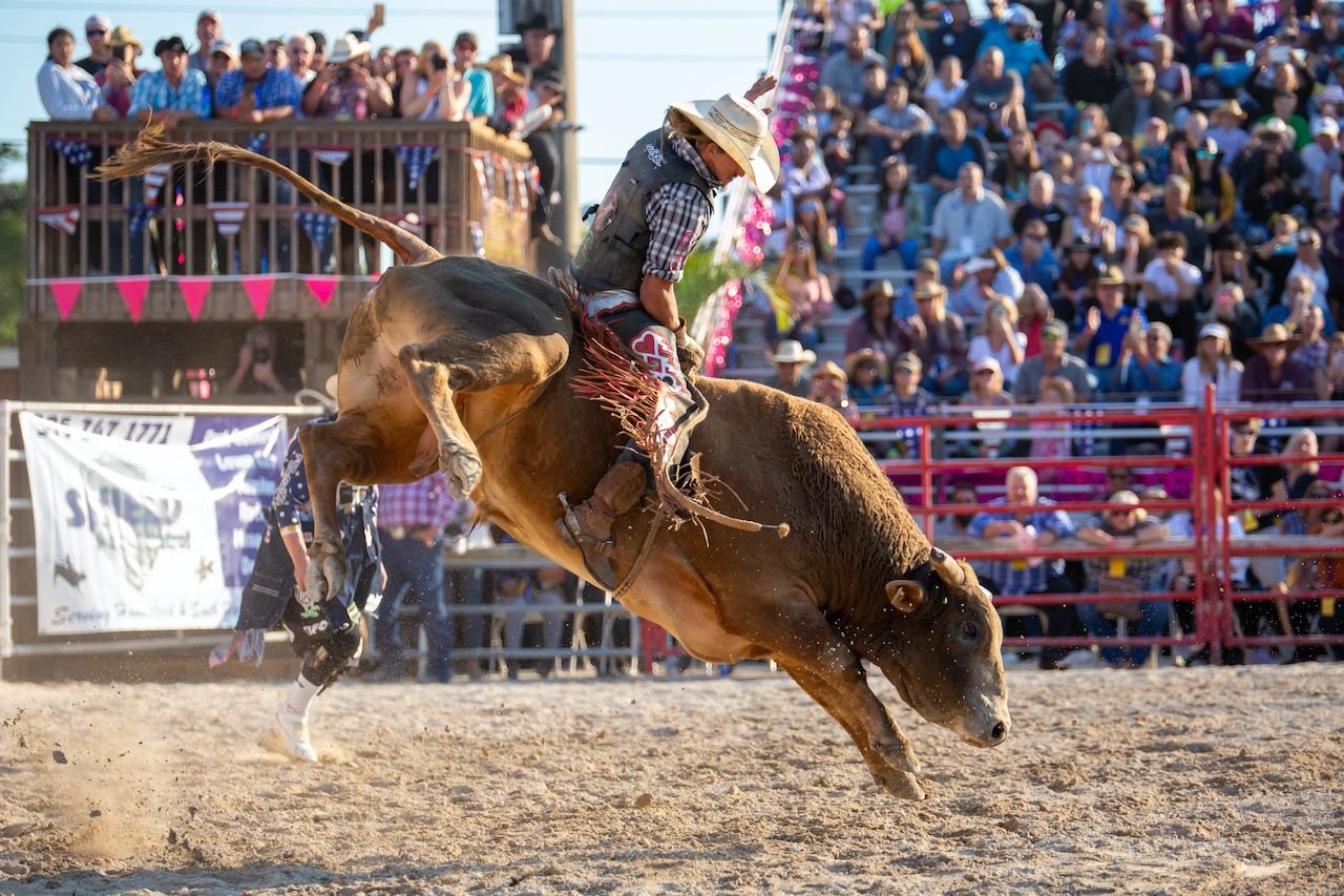 Homestead, Florida/USA - January 26, 2020: 71st Annual Homestead Championship Rodeo, unique western sporting event. Bull riding competition at Homestead Rodeo., August travel