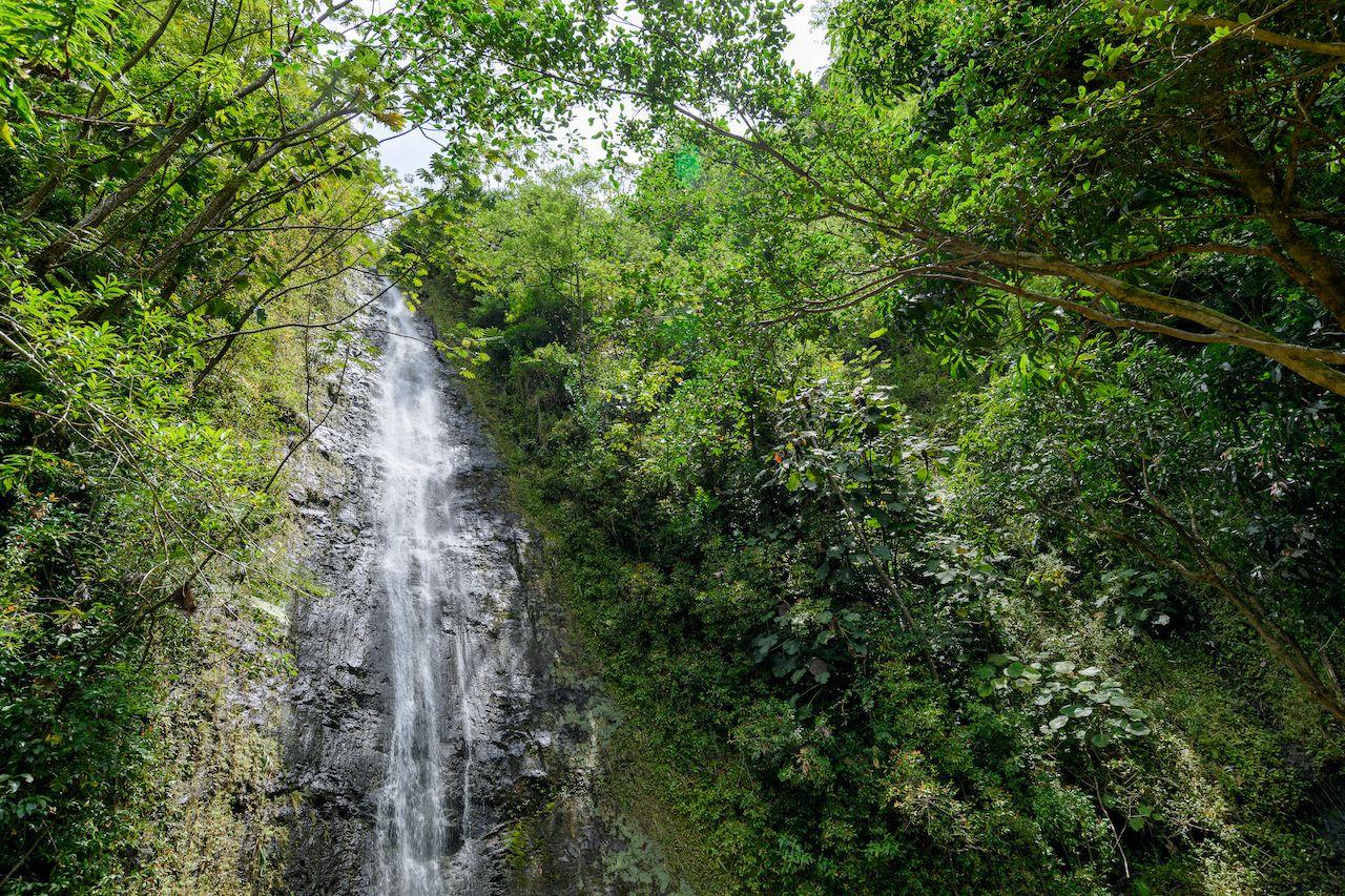 Kid-friendly-hikes-on-Oahu-Mano-Falls-Hike-1111496477, Kid-friendly hikes on Oahu