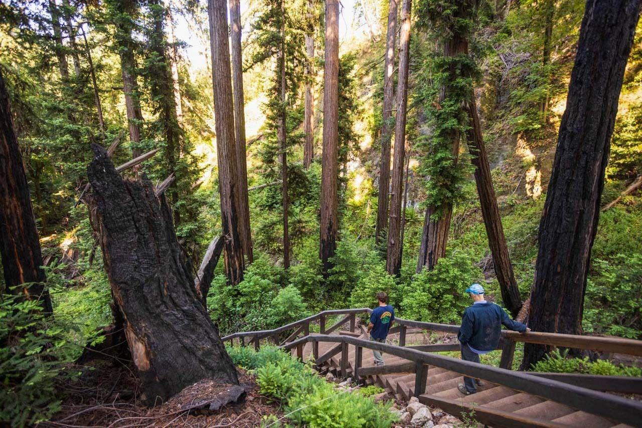Pfeiffer-Falls-Trail-reopening-Big-Sur-California, Pfeiffer Falls Trail