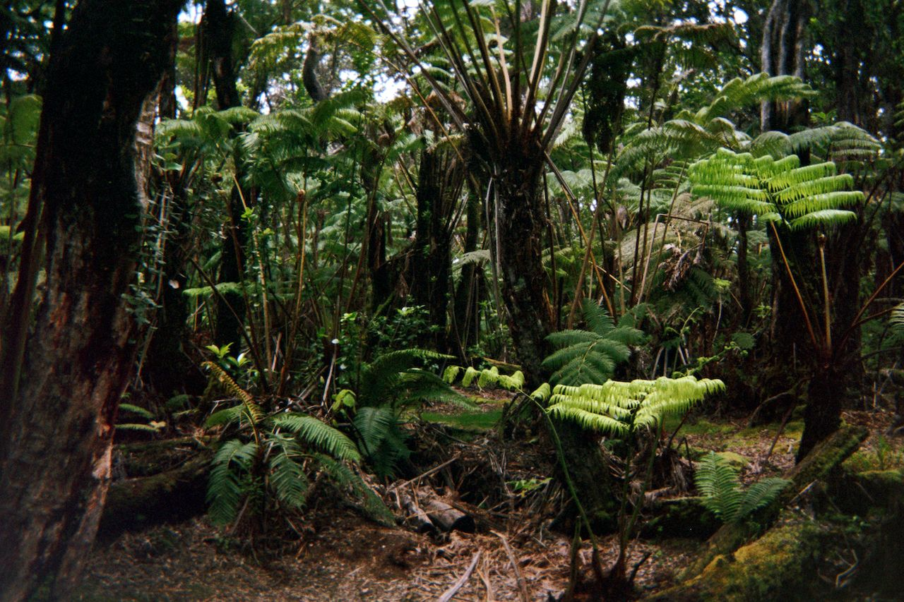 Kahoolawe Hawaii Plants native nature, Hawaii's Islands