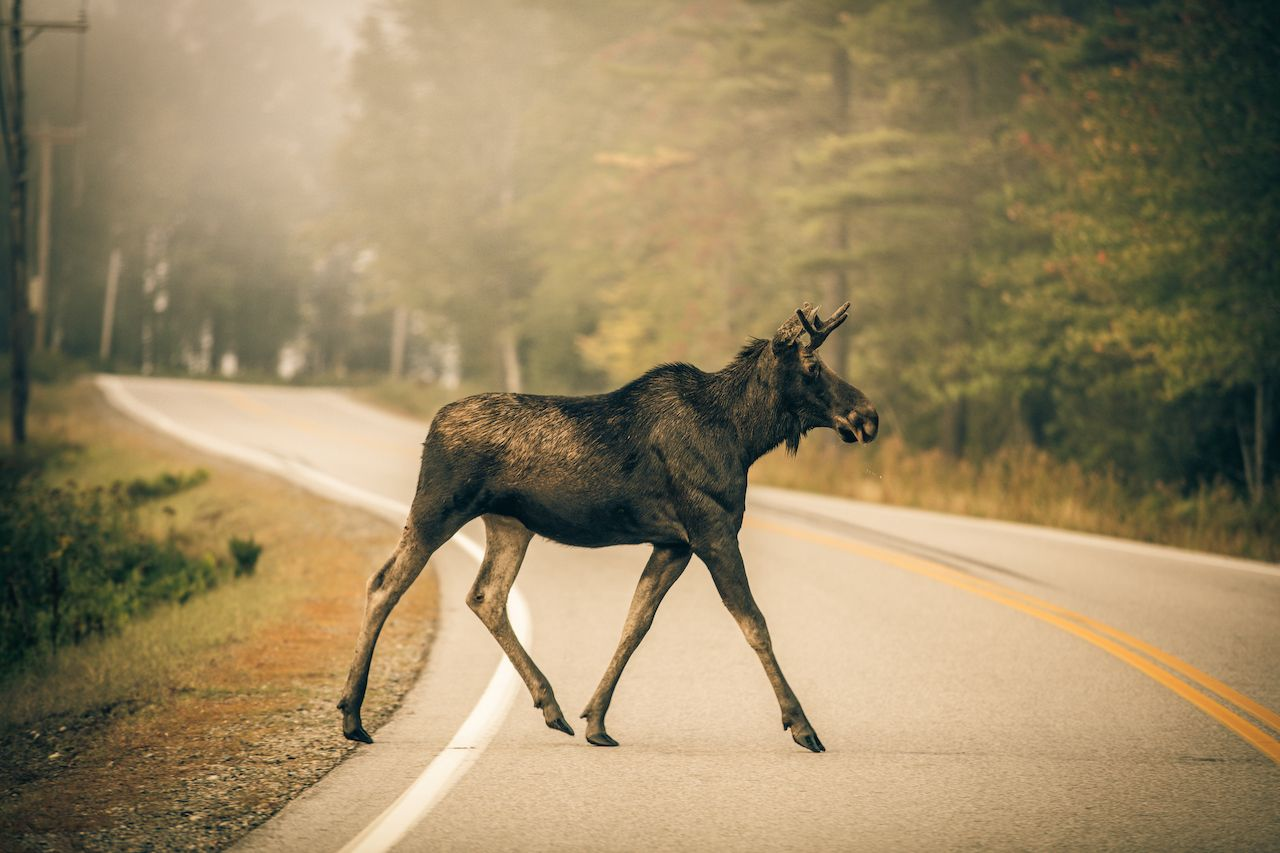 New Hampshire road trip: Don't miss these stops