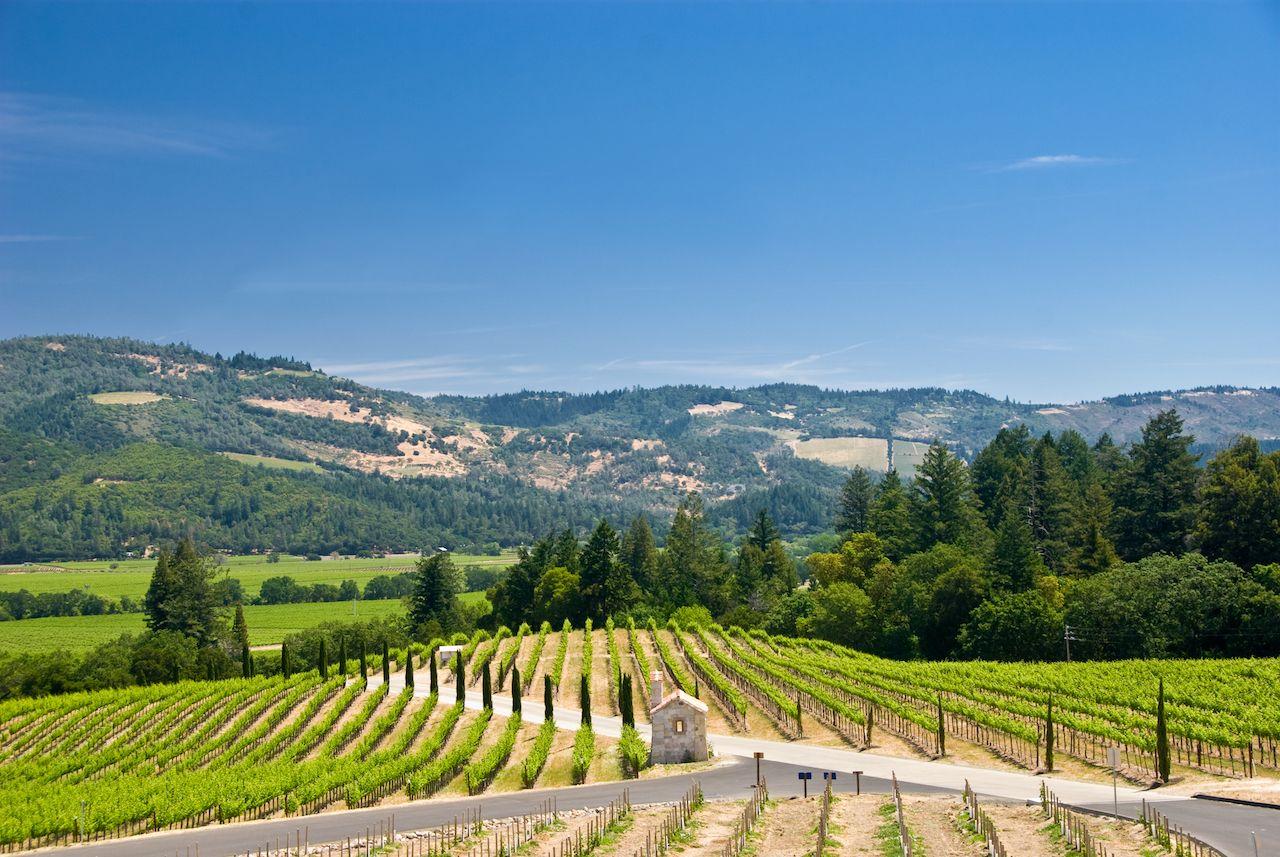 Vineyards,In,Sonoma,,California, Bodega Bay Lodge