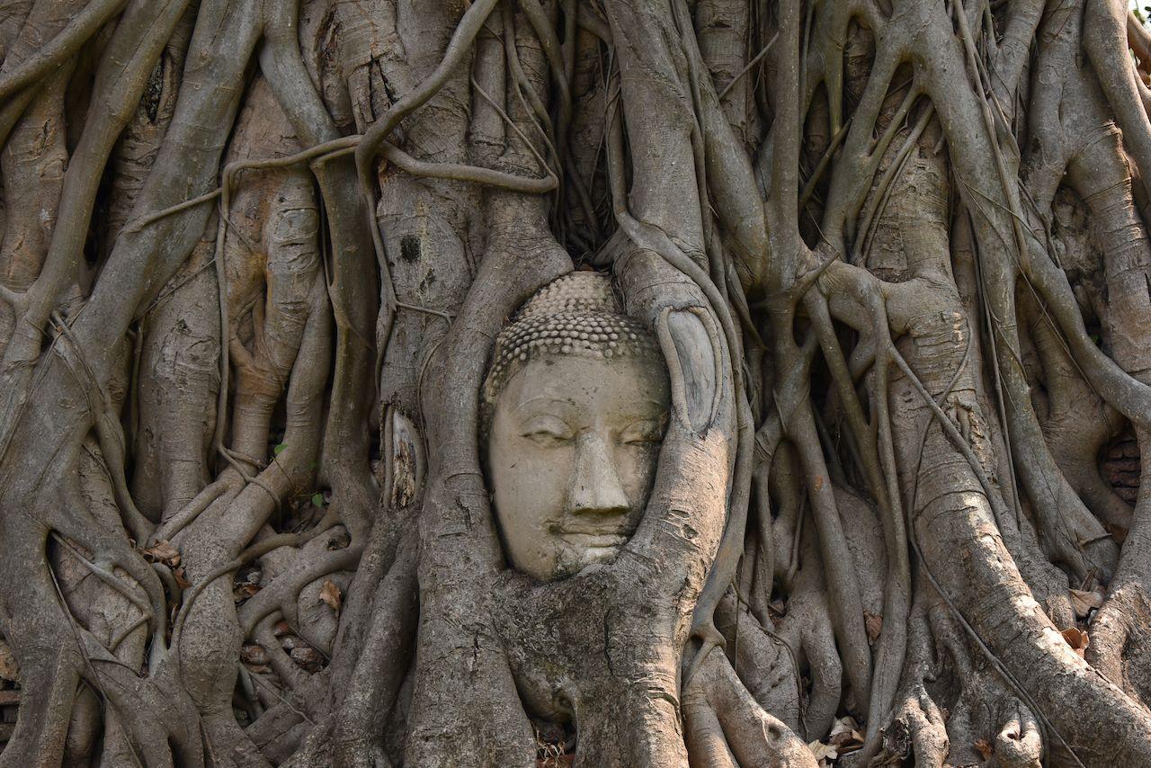 This picture was taken in Ayutthaya, Thailand., day three in Bangkok