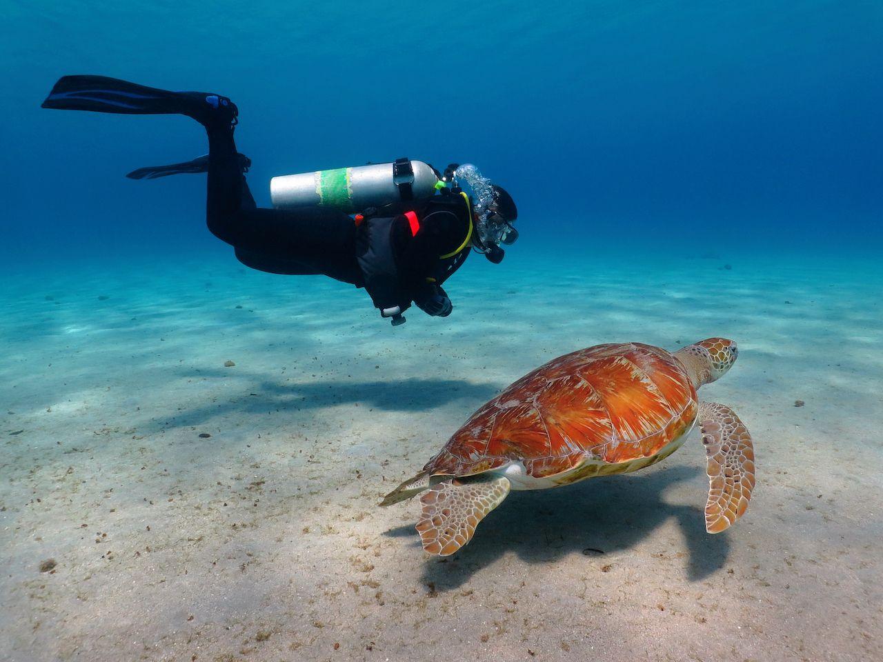 Scuba,Diver,With,Swimming,Green,Sea,Turtle,(chelonia,Mydas),In, Trip to Jordan