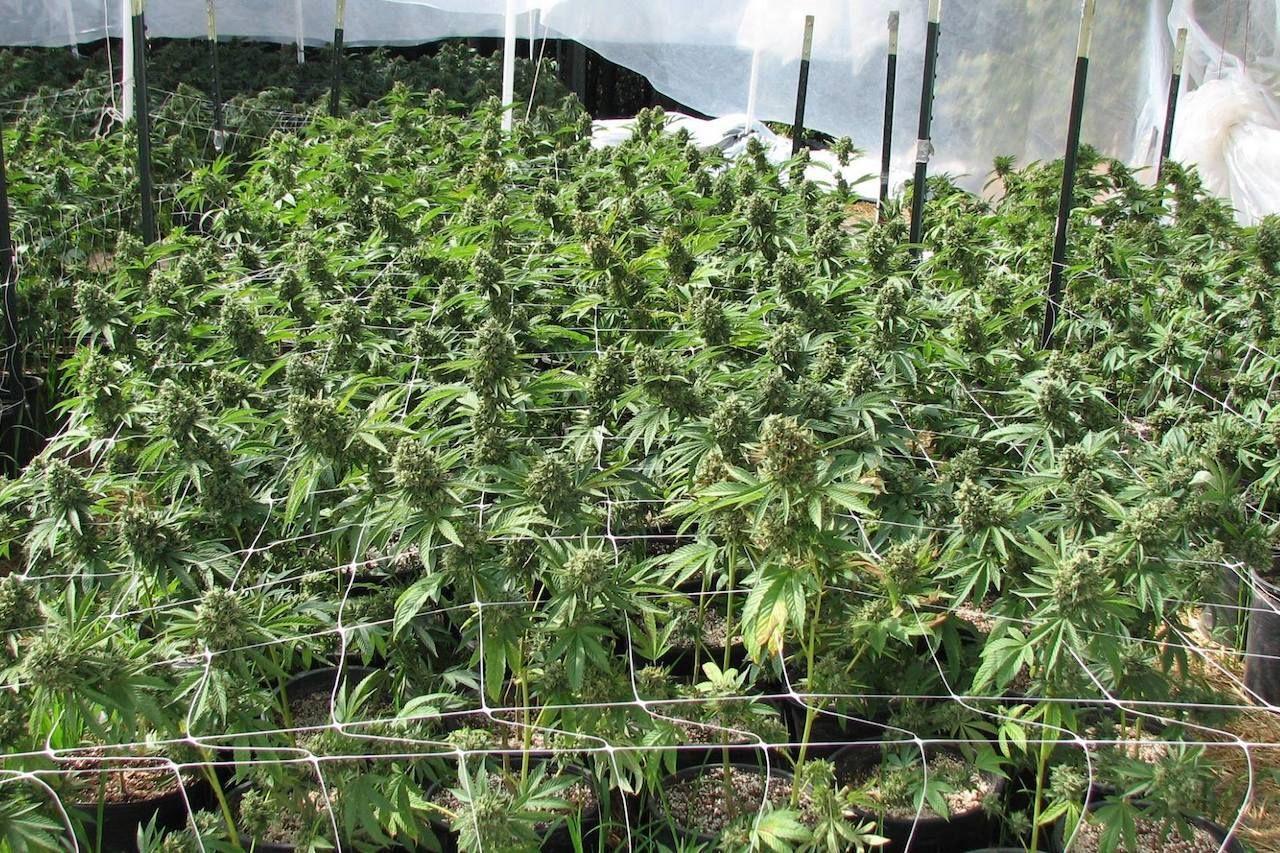 humboldt-cannabis-tours-554106188084972, Humboldt County