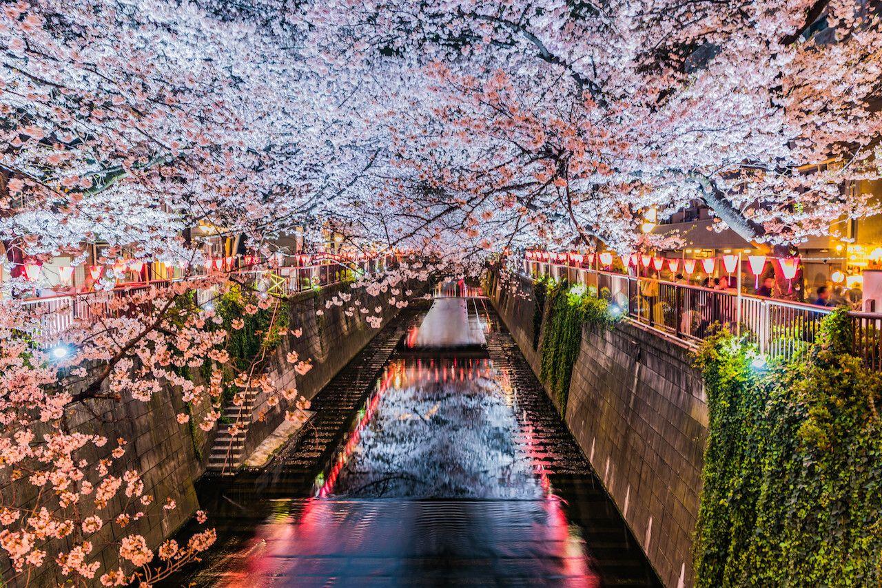 japan-festivals-617575070, Tokyo events
