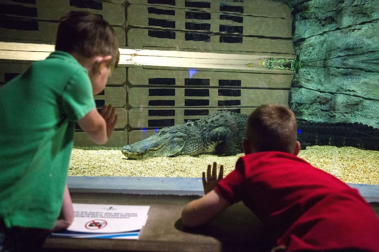 odysea-aquarium-autism-friendly, autism-friendly