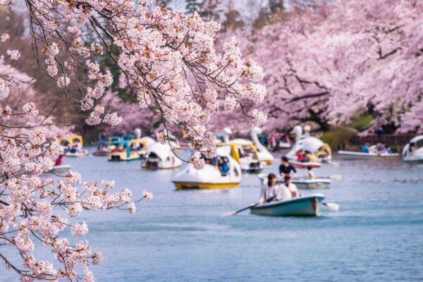 parks-in-Tokyo-Inokashira-1025677741