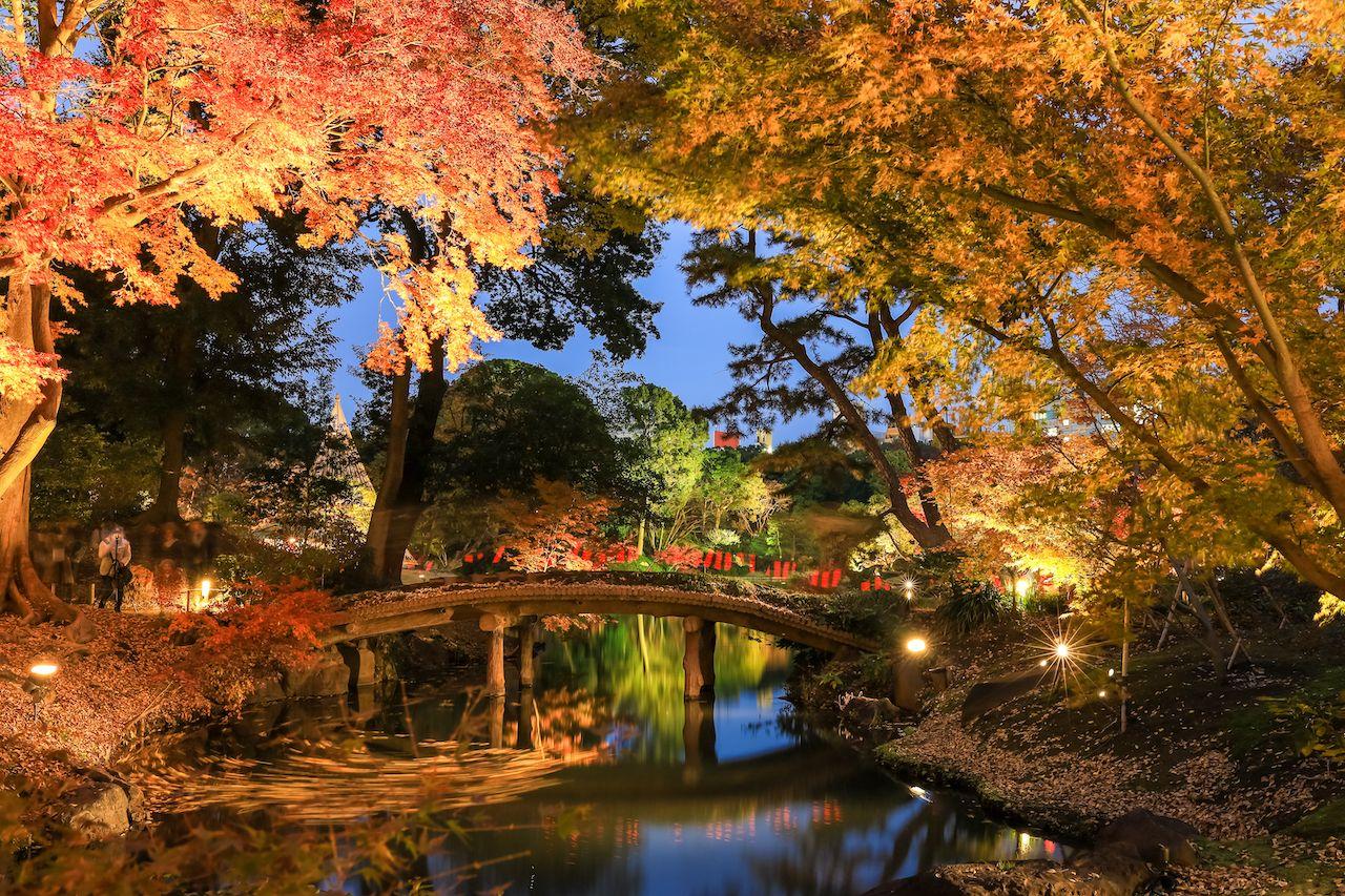 rikugien-fall-illuminations-1707735406, Tokyo events