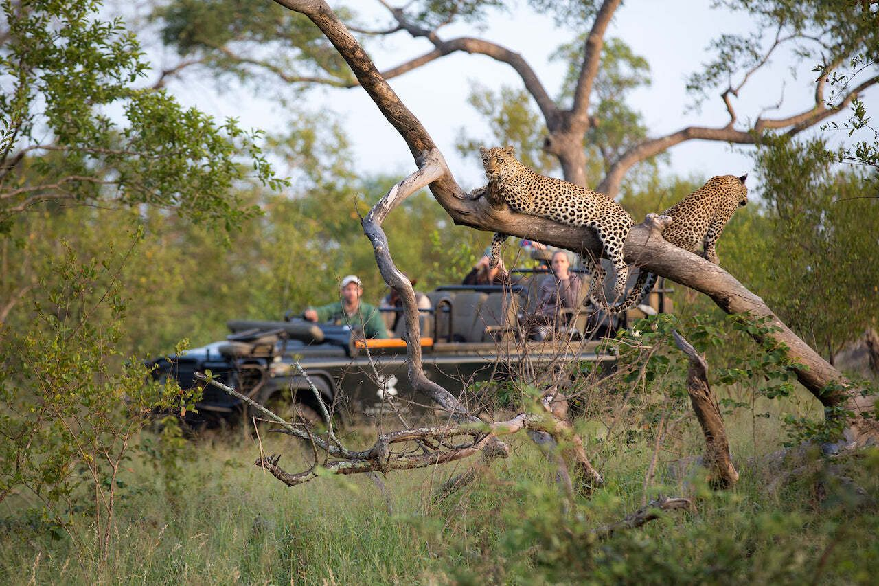 African-safari-with-family-Londolozi-animals
