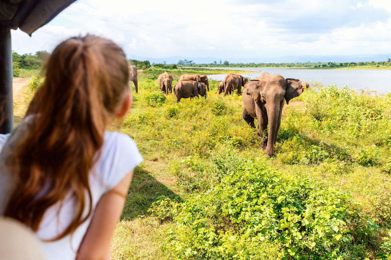 How to take your family on an African safari