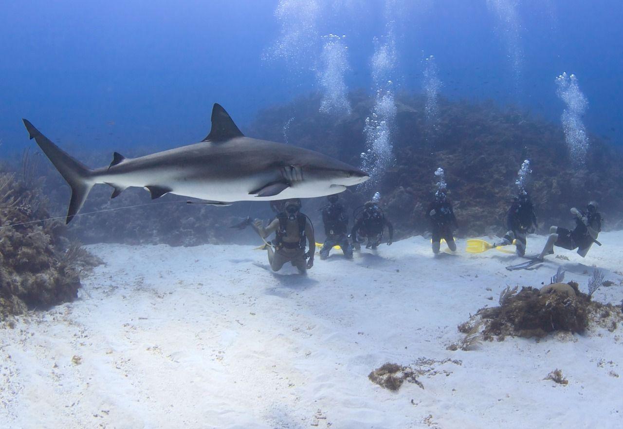 Grand Cayman Ocean Frontiers Shark