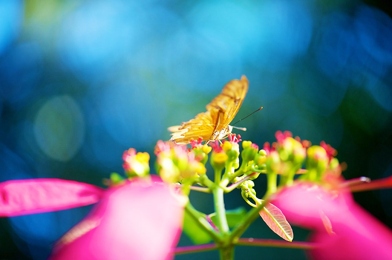 Grand Cayman Queen Elizabeth II Botanic Park Grand Cayman