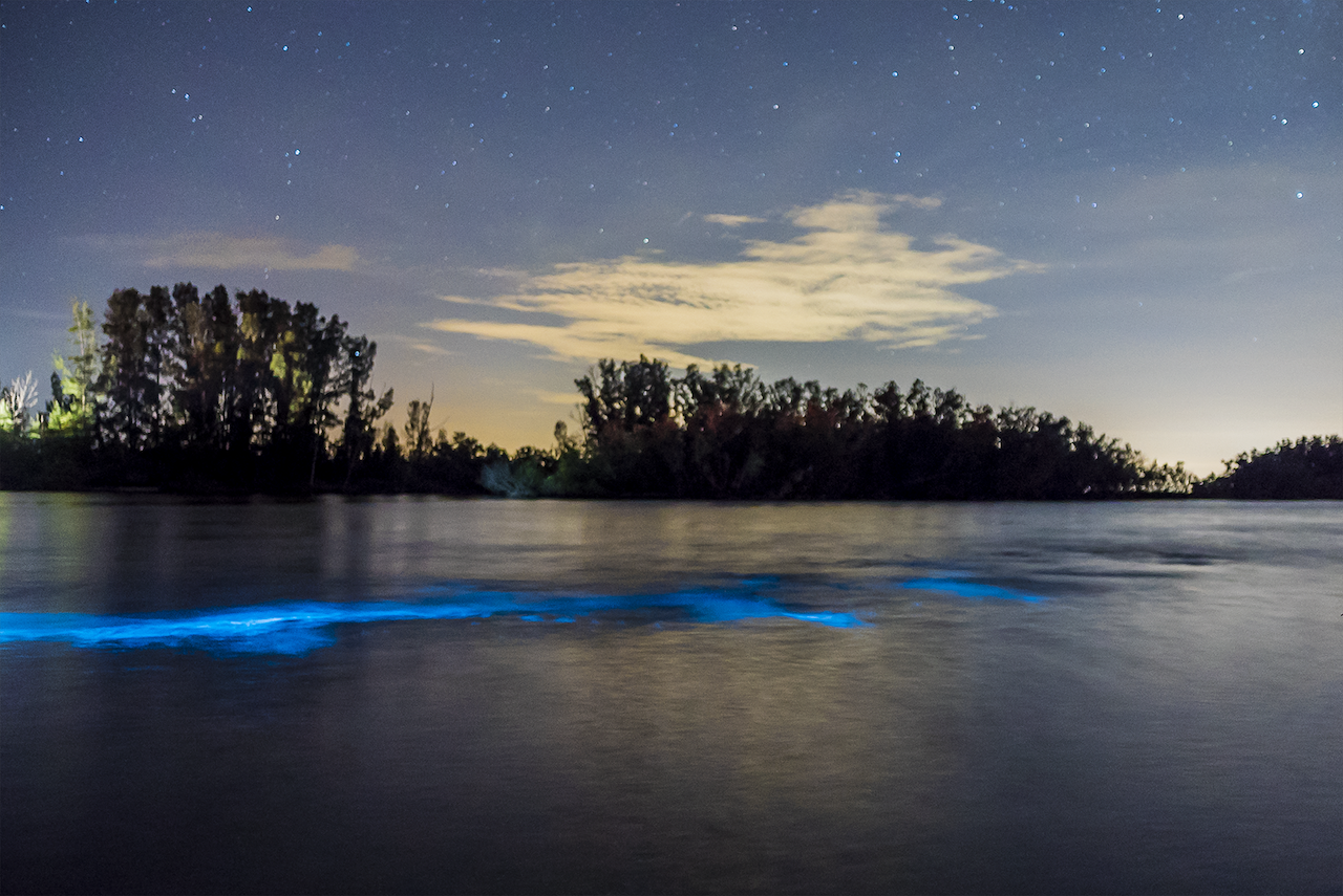 This underwater light show near Orlando is all-natural and it will blow your mind