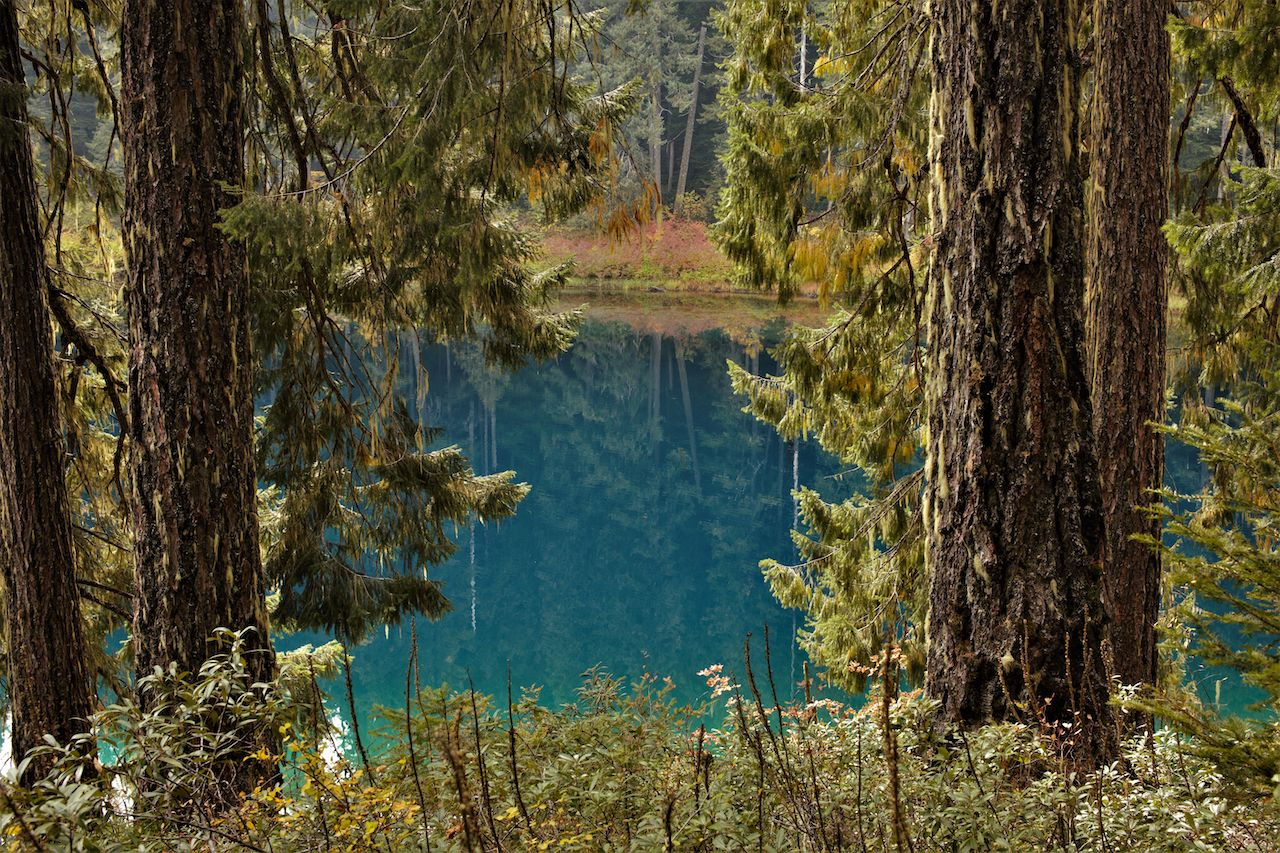View framed by trees of Clear Lake, Oregon