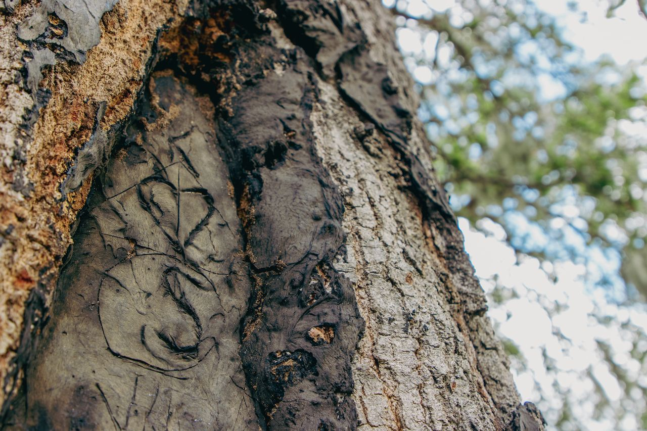 Love,Initials,Tree,Carving,On,Old,Trunk,Close,Up,Looking