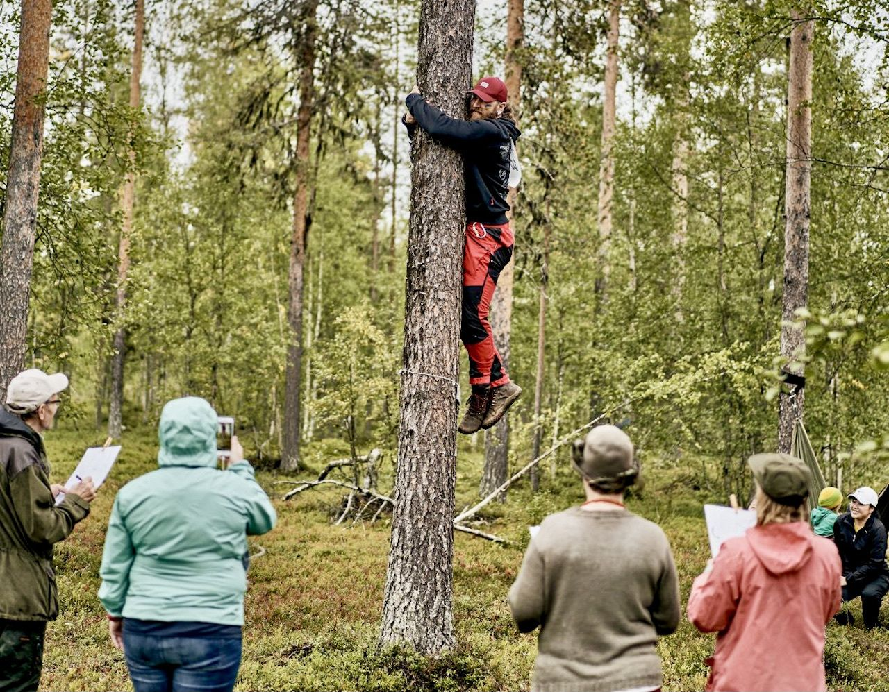 Hug a tree and you could win a trip to northern Finland
