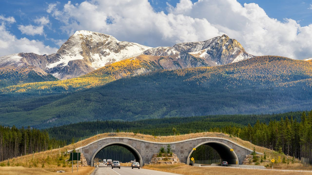 Wildlife crossing overpass on Trans Canada Highway in Banff National Park, with mountain backdrop
