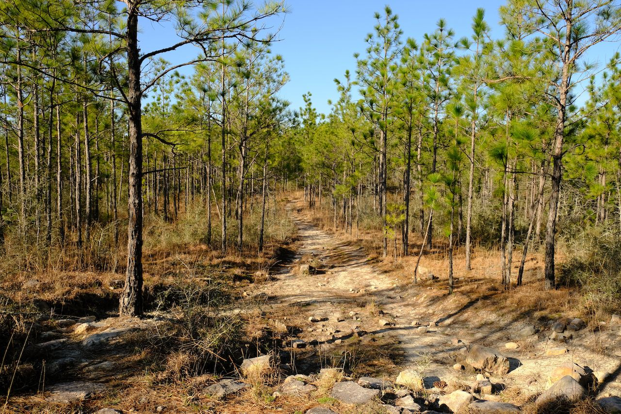 Hard hikes flat states Louisiana
