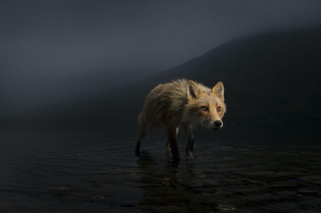 Jonny Armstrong Wildlife Photographer of the Year 2021