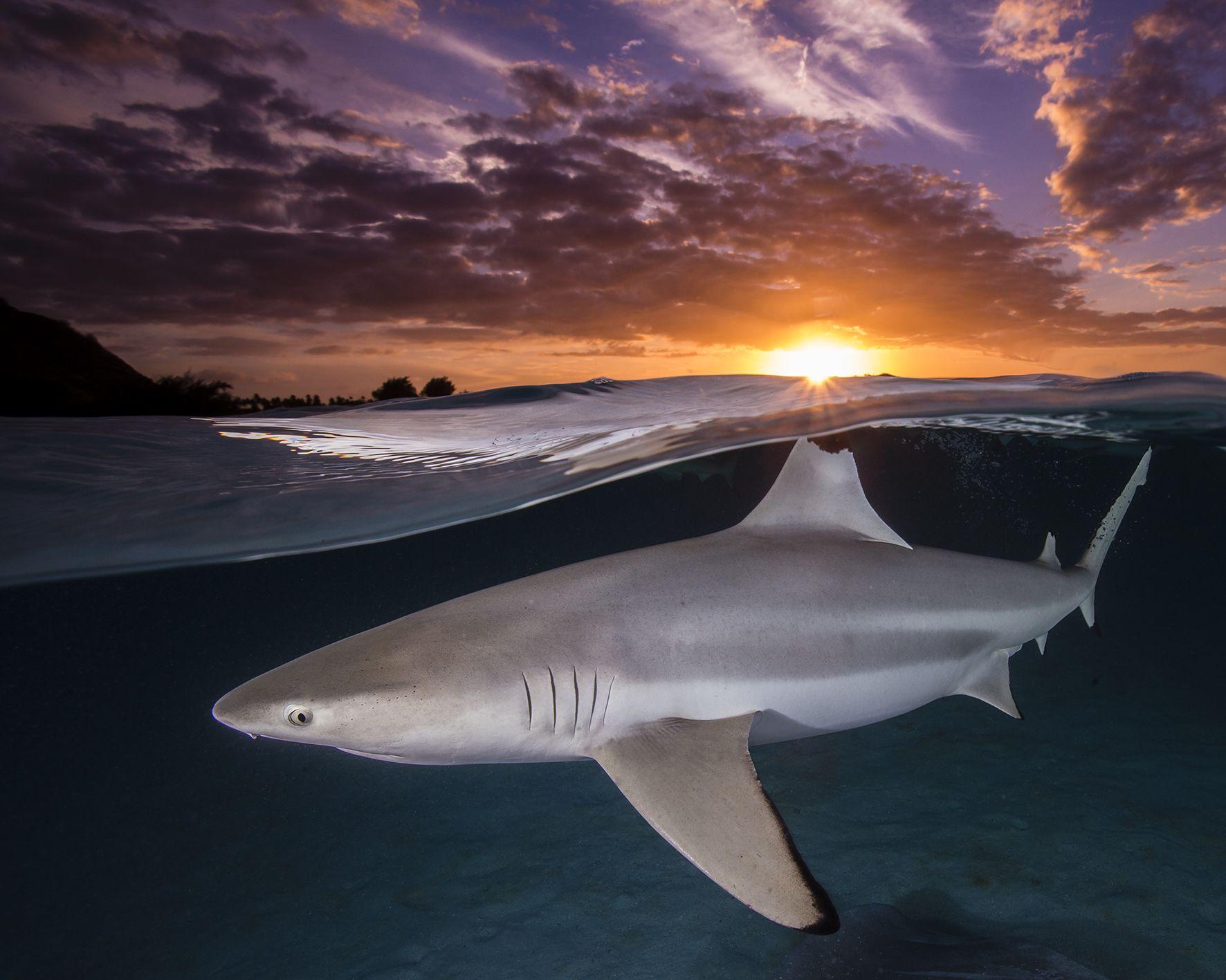 Renee-Capozzola-ocean-photography-awards