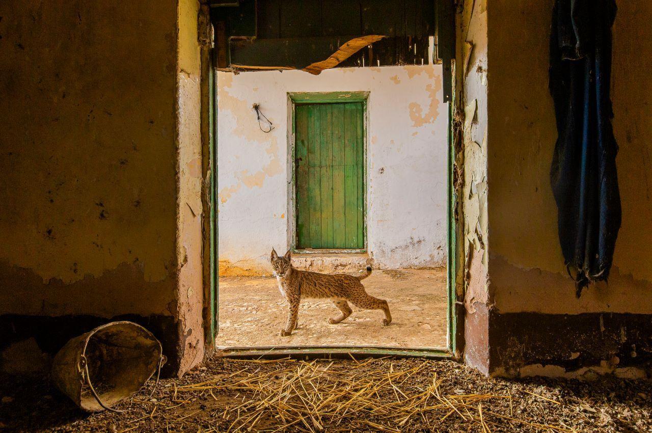 Sergio Marijuan Wildlife Photographer of the Year 2021