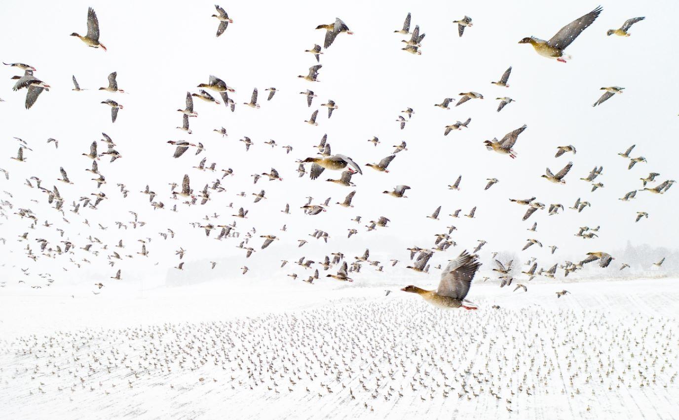 Terje-Kolaas-Drone-Photo-Awards-2021