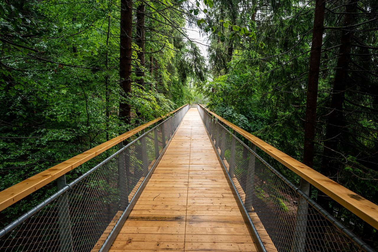 World's longest treetop walkway in Switzerland