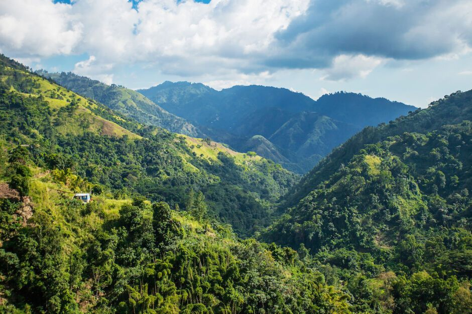 blue mountain portland jamaica