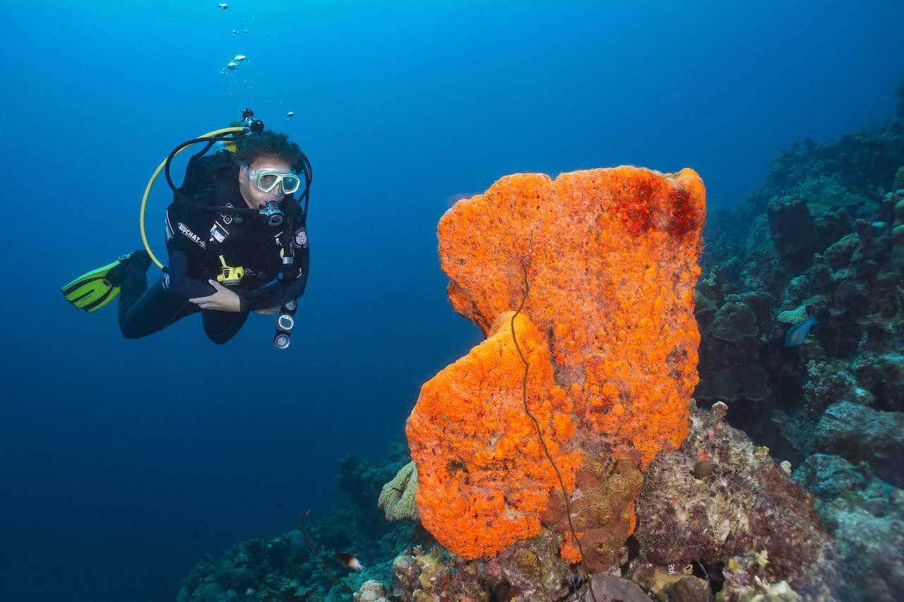 diver in bonaire next to coral