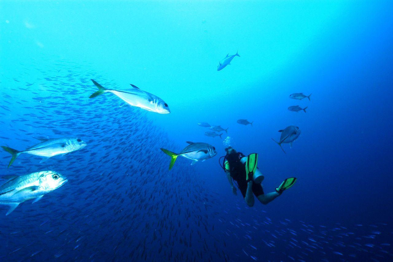 diver with fish near bonaire