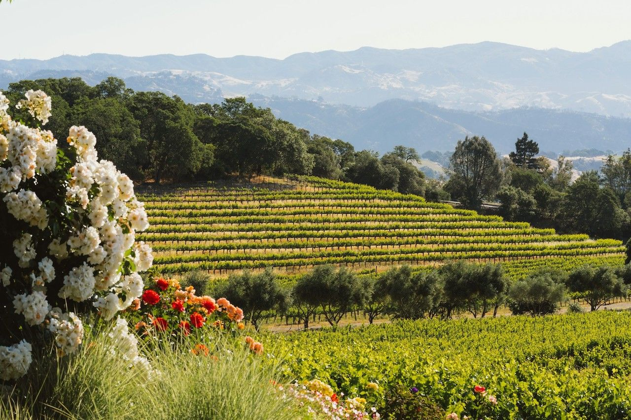 5 celebrity vineyards and wineries you can actually visit across the country