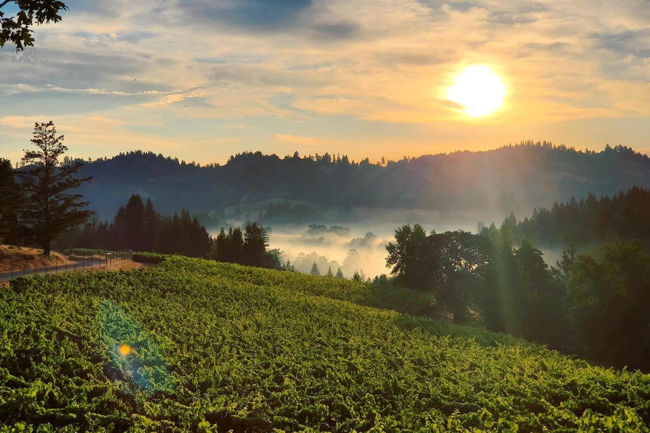sonoma county vineyard with sunrise