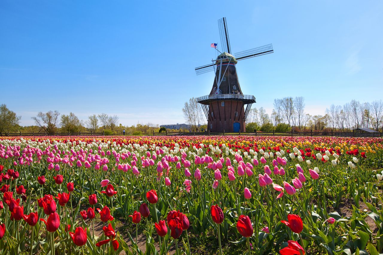 most european cities in america Windmill in Holland Michigan