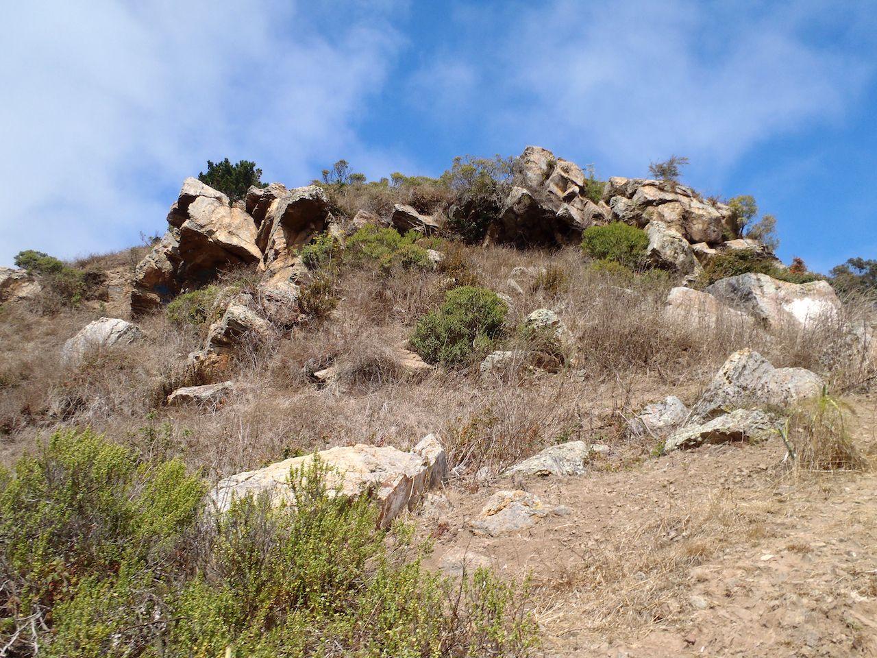Brush grows on Glen Park Canyon Cliffs in San Francisco.