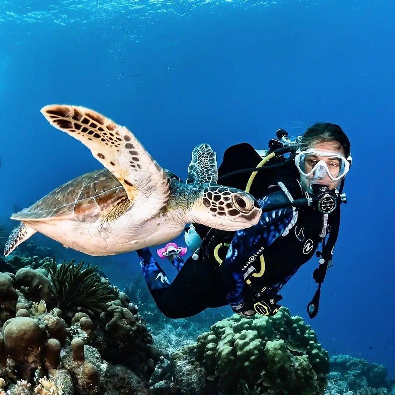 Female scuba diver admires a sea turtle underwater in Dubai