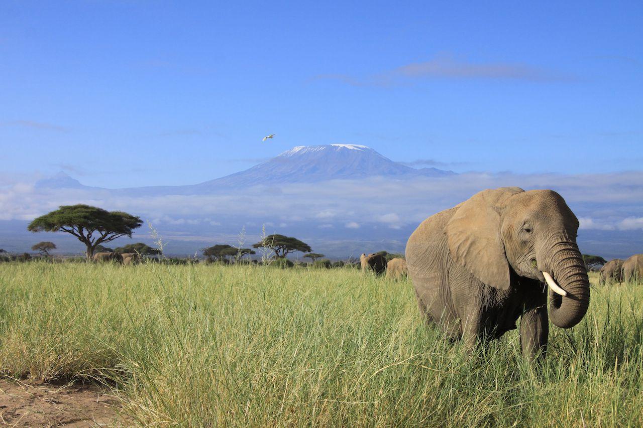 Elephant Sighting on Safari
