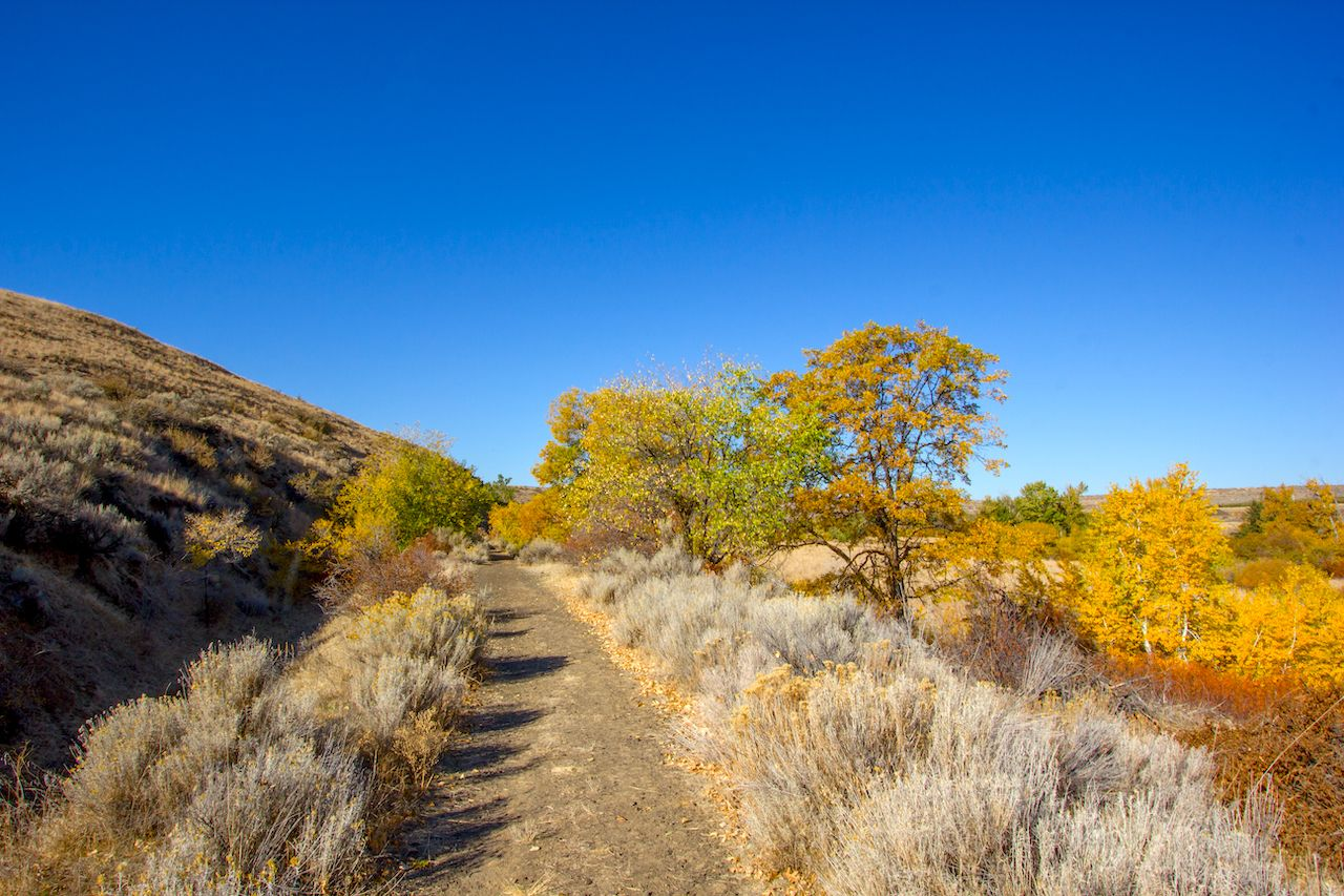 Vibrant autumn colored leaves in yellow and orange line a dirt hiking trail on Snow Mountain Ranch, part of the Cowiche Canyon Conservancy near Yakima, Washington.
