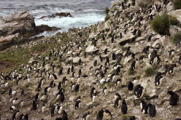 isla borbón islas malvinas pebble island falklands