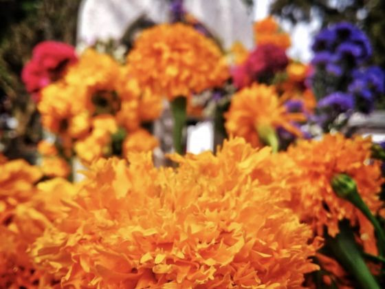 Estas Ocho Flores Son Muy Representativas De México Matador Español