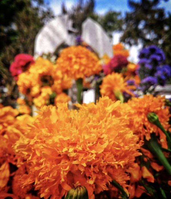 flores representativas de México